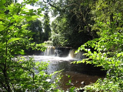 Linn Park (Glasgow) - 2021 All You Need to Know Before You