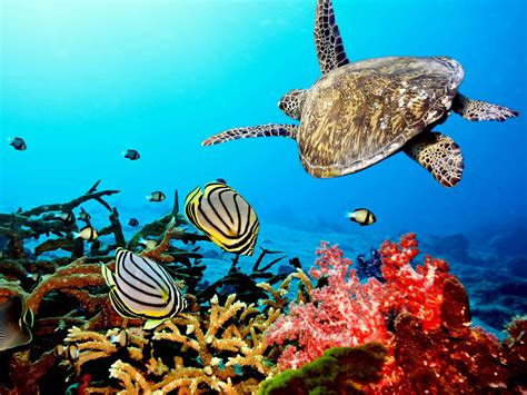 Coral reefs continue to die until carbon output drops