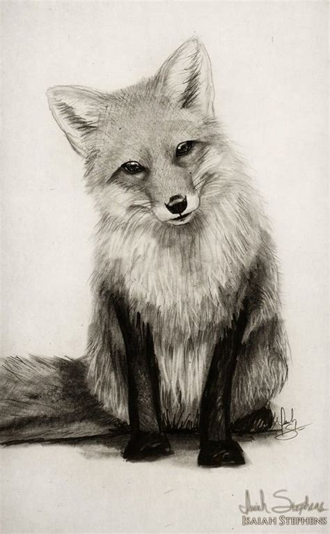 85 Simple And Easy Pencil Drawings Of Animals For Every