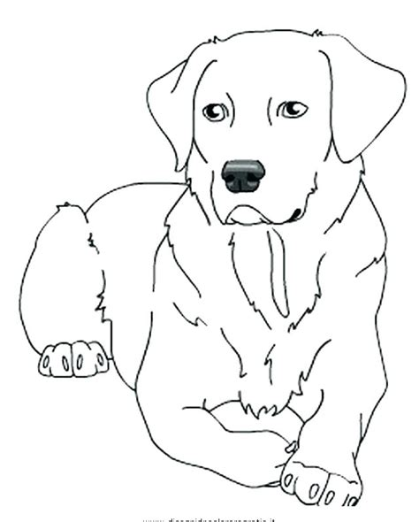 Yellow Lab Coloring Pages at GetColorings