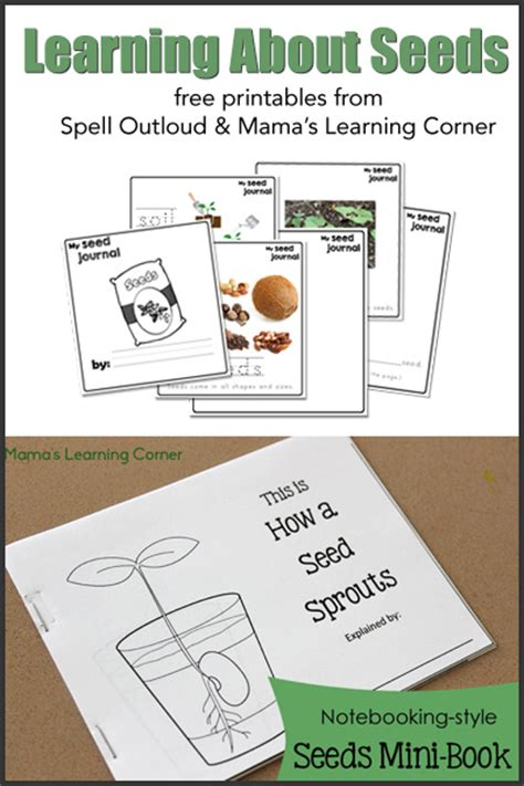 Free Studying Seeds Unit with Printable Mini-Book, Seed