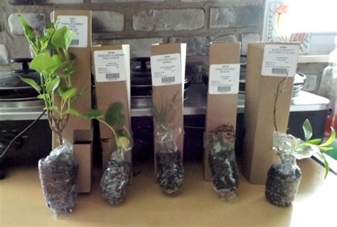 What to Expect When Buying Plants From an Online Retailer