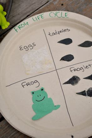 Craft the Frog Life Cycle   Activity   Education