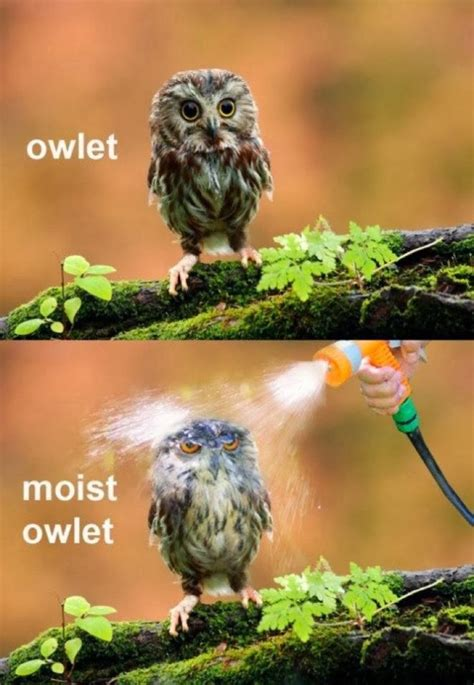 16 Funny Owl Memes - For Fum And Interesting Articles | Feafum
