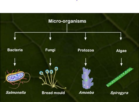 USING A FLOWCHART,DESCRIBE MICROORGANISMS GIVE EXAMPLES