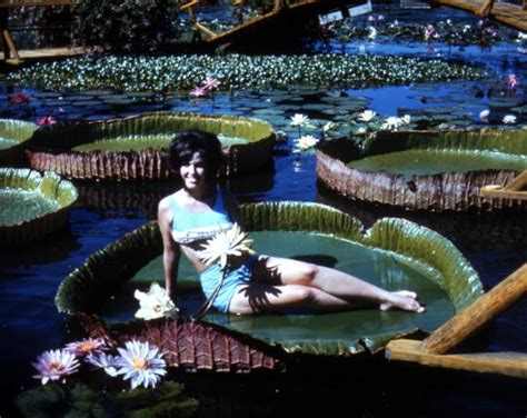 Florida Memory - Unidentified woman on a large lily pad at