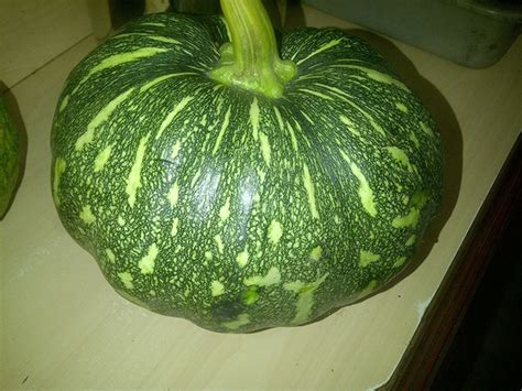 What are the exact Hindi meanings of the words 'ash gourd