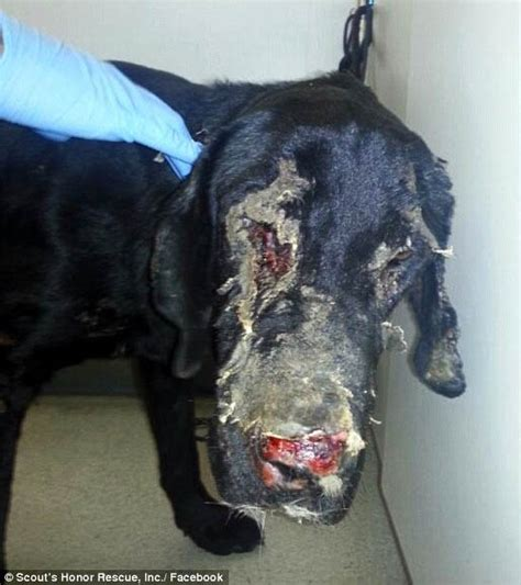 Four legged friends (and enemies): The heart-breaking
