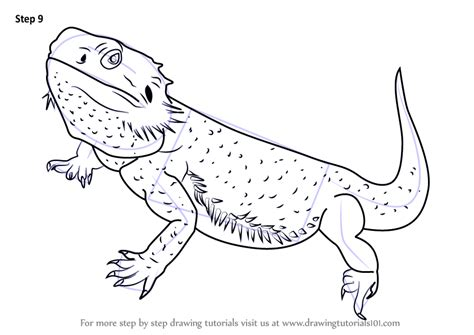Learn How to Draw a Bearded Dragon (Lizards) Step by Step