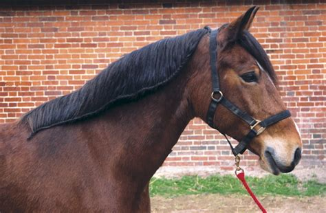 How to plait a horse's mane with Katie Jerram